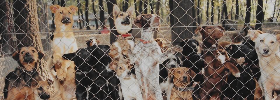 Beograd azil za pse