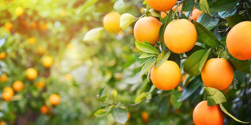 Kako se ljusti narandza?