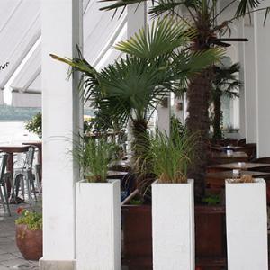 Restoran Cantina de Frida Beograd